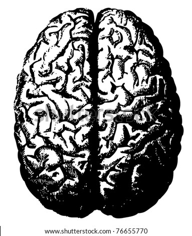 Vector brain from atlas published in 1851(The iconographic encyclopedia of science, literature and art). - stock vector