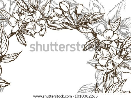 Black And White Blooming Branches Of Apple Tree.