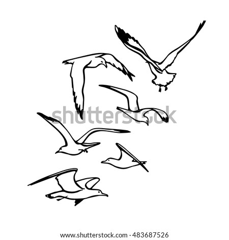 sea bird stock images royalty free images amp vectors