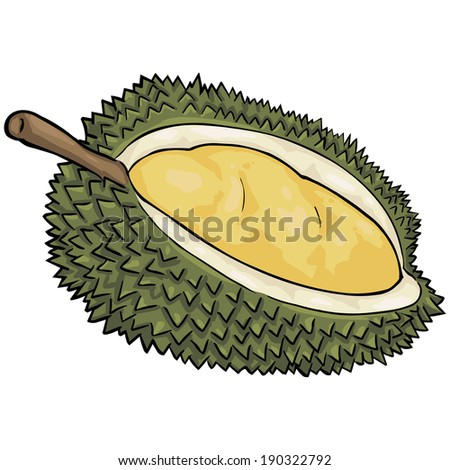 Vector Cartoon Durian - stock vector