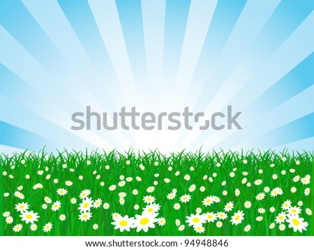 vector chamomile flower field and sky - stock vector
