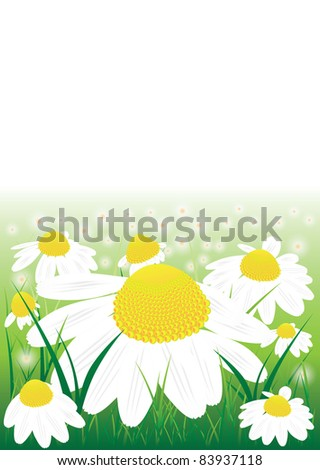 Vector chamomile flowers in the green grass - stock vector