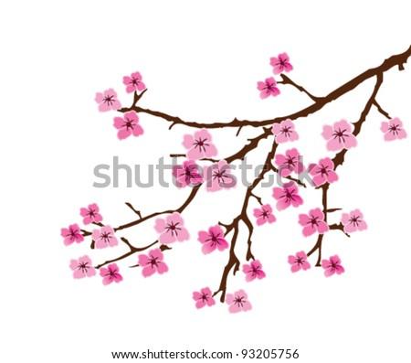 vector cherry blossom branch - stock vector