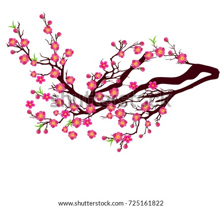 Vector Cherry Blossom Chinese New Year Stock Vector ...