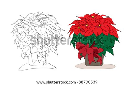 Vector christmas poinsettia color and black and white version on a white background - stock vector