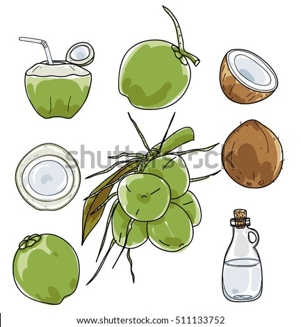 vector Coconut hand drawn vector set Vegetable illustration drawing.