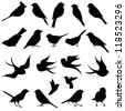 Vector Collection of Bird Silhouettes - stock photo