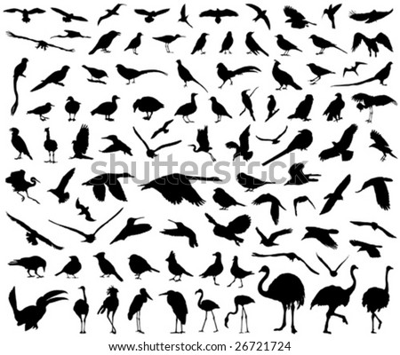 vector collection of birds - stock vector