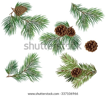 Vector collection of Christmas tree branches with pine cones - stock vector