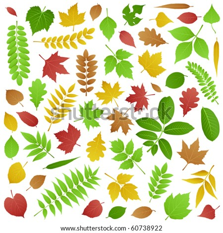 Vector Collection of Green and Autumn Leaves - stock vector
