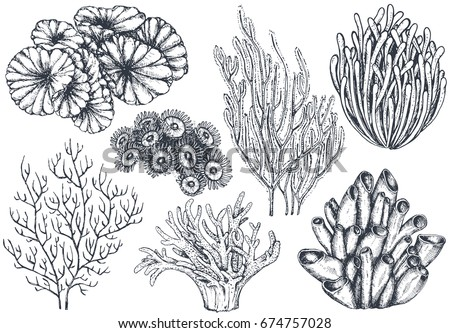 Good Vector Collection Of Hand Drawn Ocean Plants And Coral Reef Elements In  Sketch Style Isolated On