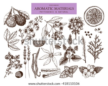 Vector collection of  hand drawn perfumery and cosmetics materials sketch. Vintage set of aromatic plants for high-quality cosmetics and scented industry - stock vector
