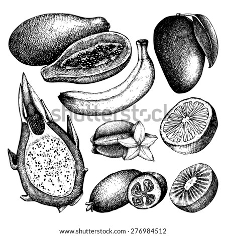 Vector collection of ink hand drawn exotic fruits sketch for kitchen and restaurant design. Vintage colorful tropical fruit illustration for vegetarian food.