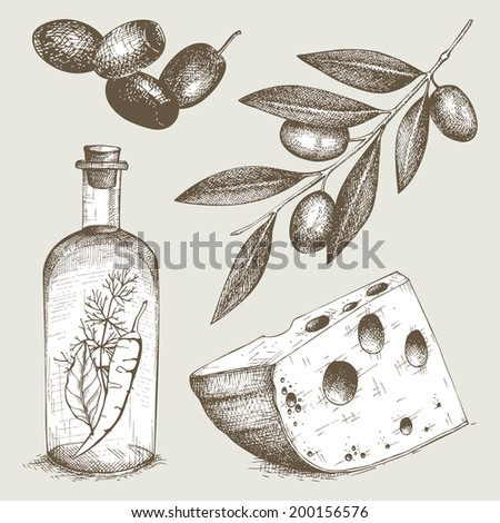 Vector collection of  ink hand drawn olive illustration Vintage healthy food illustration. Decorative  engraved  food isolated on white - stock vector