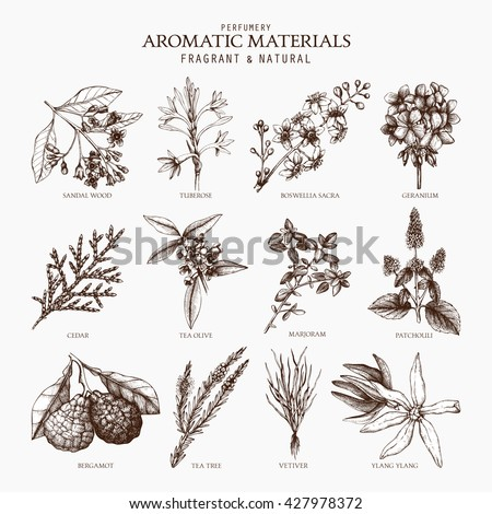 Vector collection of perfumes and cosmetics ingredients sketch. Vintage set of exotic plants for perfumes and cosmetics. Perfumes and cosmetics aromatic materials. Exotic flowers set. - stock vector