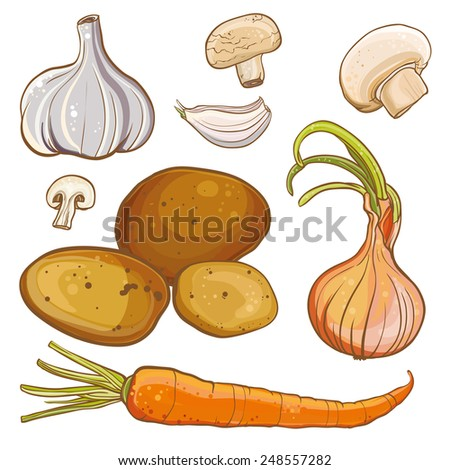 Vector color illustration of onion, carrot, potatoes, garlic, mushrooms. Ingredients for cooking. - stock vector