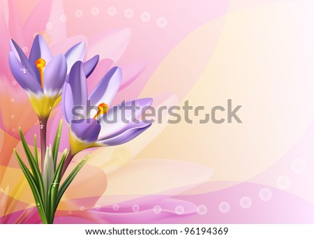 Vector colorful card with crocuses - stock vector