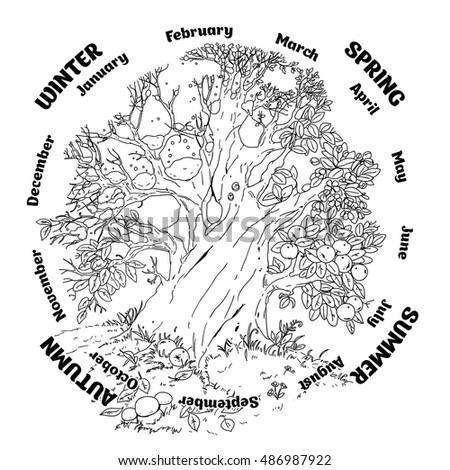 4 Seasons Colouring Sheets : Vector coloring book adult tree 4 stock 486987919