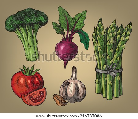 vector colour hand drawn illustration of vegetables - stock vector