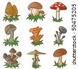 Vector colour set of different cute mushrooms - stock vector