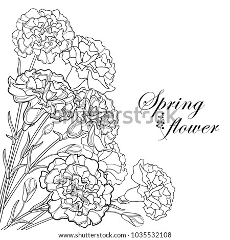 Vector Corner Bouquet With Outline Black Carnation Or Clove Flower Bud And Leaf Isolated On