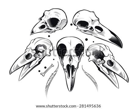 Vector crow skull - stock vector