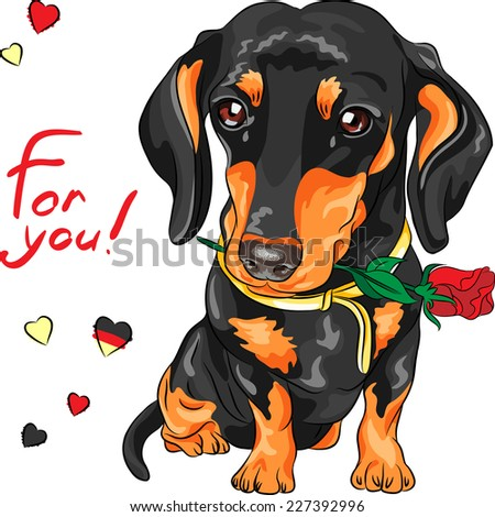 Vector cute dog breed dachshund with red flower - stock vector
