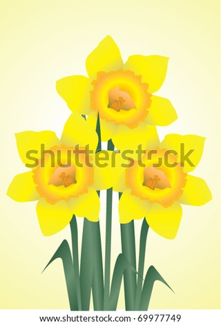 vector daffodils - stock vector