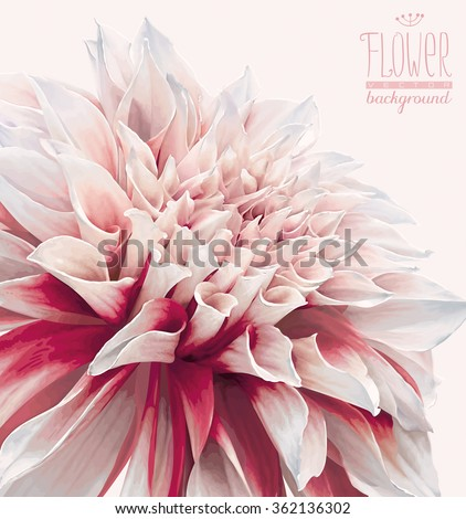 Vector dahlia flower background for Valentine's Day, wedding, events and sales. Drawn without gradient fills. - stock vector