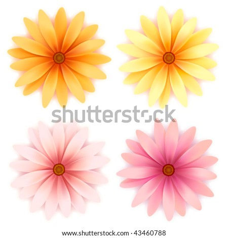 Vector  daisy flowers set  isolated on white - stock vector