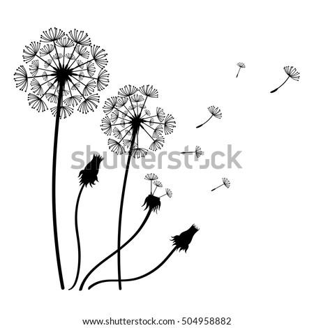 Vector dandelion flowers isolated on white.