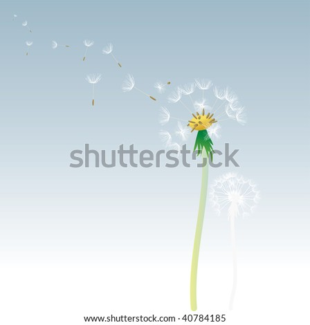 vector dandelion with flying seeds