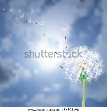 vector dandelion with flying seeds over the sun - stock vector