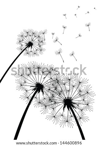 vector dandelions on white - stock vector