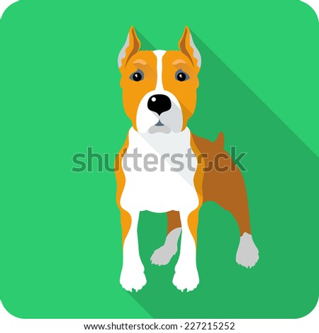 Vector dog American Staffordshire Terrier standing icon flat design