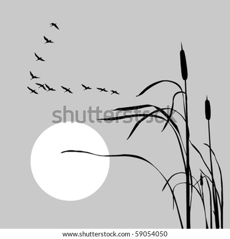 vector drawing flock geese on bulrush - stock vector
