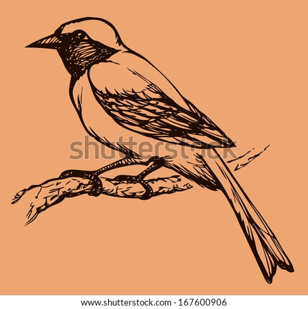 "Vector drawing of a series of monochrome sketches ""Birds"". Redstart, is a small passerine bird in the redstart genus Phoenicurus"