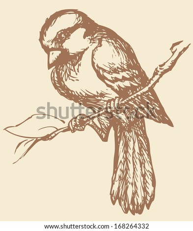 "Vector drawing of a series of monochrome sketches ""Birds"".  Sparrow is a small passerine birds, Passeridae. They are also known as true sparrows, or Old World sparrows - stock vector"