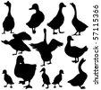 Vector Duck & Goose Silhouettes - stock vector