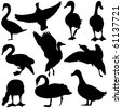 Vector Duck & Goose Silhouettes - stock vector