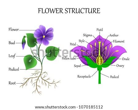 Flower Parts Diagram Of Purple Diy Wiring Diagrams