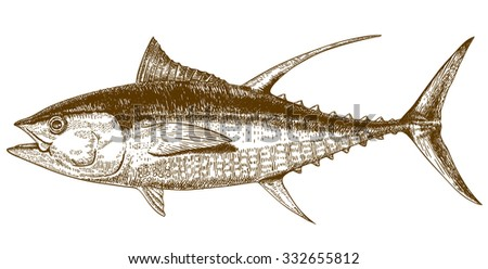 Vector engraving illustration of highly detailed hand drawn tuna isolated on white background - stock vector