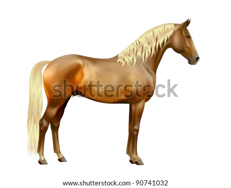 Vector exterior of silver bay Rocky Mountain horse isolated on white background - stock vector