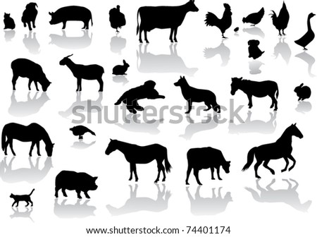 vector farm animals with reflection - stock vector