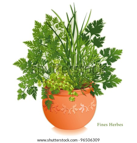 vector - Fine Herbs or Fines Herbes Garden. French cooking classic, left-right: Chervil, Tarragon, Sweet Marjoram, Chives, Italian Parsley, clay flowerpot planter, floral design.  EPS8 compatible. - stock vector
