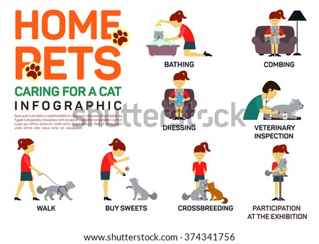 Vector flat illustration infographic of caring about pets cat. Bathing, washing, dressing, combing, veterinary inspection, going for a walk, crossbreeding, buying food,  participation in an exhibition - stock vector