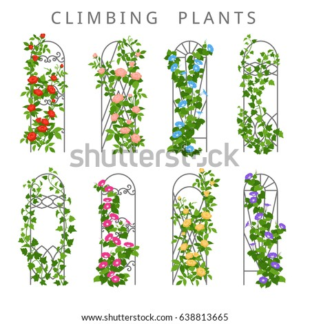 Vector Flat Illustration Of Garden Trellis With Climbing Plants Colored Icons Vertical Gardening Isolated