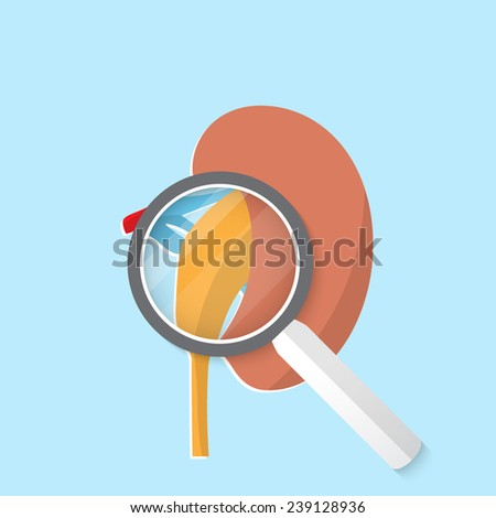 Vector flat kidney icon. Eps 10 illustration. - stock vector