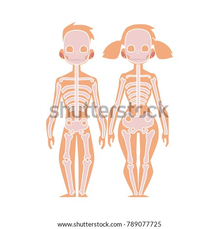 Vector Flat Structure Human Body Anatomy Stock Vector 789077725