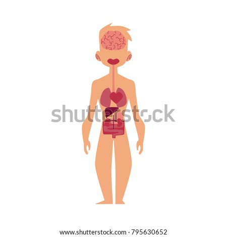 Vector Flat Structure Human Body Anatomy Stock Vector 795630652 ...